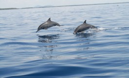 Dolphin Seafaris - Sand and Sea Water Sports