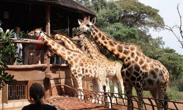 Giraffe Center: African Fund for Endangered Wildlife